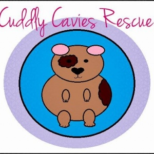 Cuddly Cavies Rescue