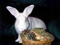 Rabbit & Pocket Pet Adoptions